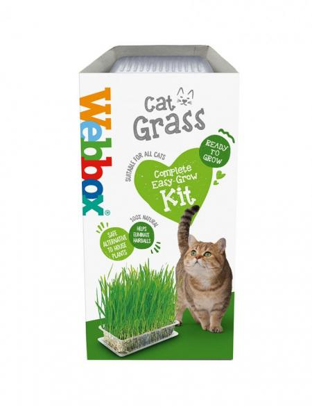 Webbox Cat Grass